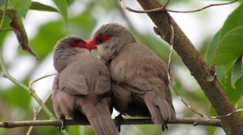 Ilhabela Bird Week é atração no arquipélago de 22 a 26 de setembro