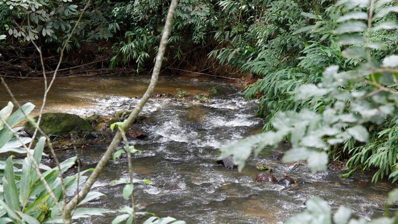 Bacia do Rio do Peixe em São Francisco Xavier, em São José, terá plantio de 84 mil mudas